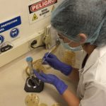 Investigadores Colombianos Identifican Bacteria Cultivada con Suero Lácteo que Ayudaría a Preservar Alimentos