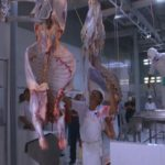 Chile Permite Nuevamente las Importaciones de Carne Bovina desde Colombia