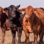 Mercosur Tienen Nuevas Reglas para la Importación de Animales y de Material Genético