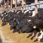 Investigadores en Argentina Producen Lácteos Funcionales de Origen Natural que Ayudan a Prevenir Enfermedades