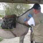 Preocupación por Influenza Equina en Cuatro Regiones de Colombia