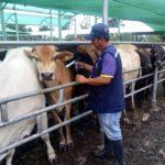 Más de 4 Millones de Animales Fueron Vacunados Contra la Fiebre Aftosa en Ecuador