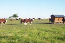 Más ecológico: aprovechan los efluentes de feedlot para nutrir el suelo