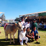 Molineros ganan en Expo Yauris 2018 en Junín