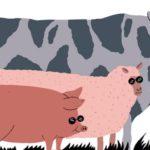 Bienestar Animal - Una Cuestión Ética Pero También Económica