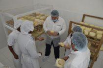 Campesinos Ayacuchanos Producen Hasta 4 Toneladas de Queso al Mes