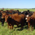 Argentina - Sector bovino crece más de lo que se esperaba en el 2018