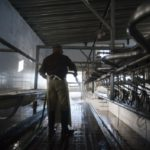 Empresas lácteas de Perú Buscan Potenciar su Producción con Modelo Uruguayo