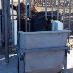 Argentina Aplica Ganadería de Precisión con Comederos Inteligentes