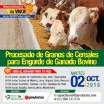 EN VIVO: Procesado de Granos de Cereales para Engorde de Ganado Bovino