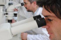 Argentina – Expertos del INTA Logra Mejorar el ADN de los Animales en una Sola Generación