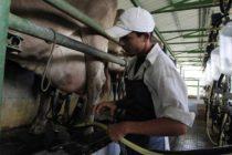 Mejorarán Producción de Leche al Libera Fincas de Brucelosis en Honduras