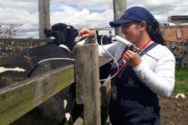 Colombia Vacunó más de 850,000 Bovinos y Bufalinos contra la Fiebre Aftosa