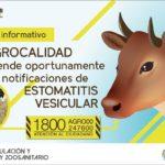 Ecuador: Agrocalidad Atiende Oportunamente Notificaciones de Estomatitis Vesicular
