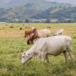 Las Expropiaciones de Tierras Desequilibran la Producción Agrícola y Ganadera en Venezuela