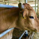 Nuevo Caso de Vaca Loca en Estados Unidos