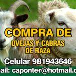 Solicitamos comprar cabras y ovejas para la zona norte del país