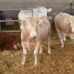 Proyecto para reducir la huella ambiental de la producción de carne de bovino