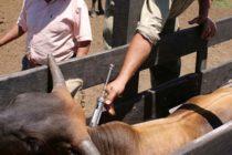 Paraguay Seguirá Vacunando Contra Fiebre Aftosa a Diferencia de Argentina y Brasil