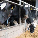 EE.UU – Investigación Asegura que Anual los Ritmos Biológicos Gobiernan la Producción de Leche en Ganado Lechero
