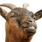 Los Pequeños Criadores de Cabras y la Producción de Quesos