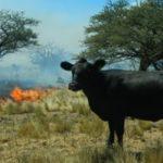 La APP que Permite Conocer el Riesgo de Incendios en Tiempo Real en la Ganadería
