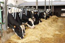 Uso de Grasas Protegidas en la Alimentación de Vacas Lecheras