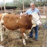 Consorcio Fleckvieh Importó Terneras desde Austria al Perú