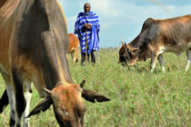 La FAO y la Sanidad Animal