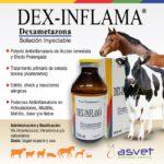 Asvet presenta Dex-inflama Solución Inyectable