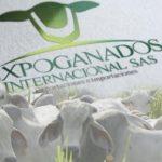 Colombia está Preparada para Exportar Ganado en Pie