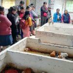 Criadores de Cuyes Conocen Nuevos Métodos de Manejo Tecnificado Desarrollados por El INIA