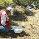 La Orina del Ganado Produce más Gases de Efecto Invernadero Cuando Cae en Tierras Degradadas