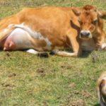 ¿Cómo Prevenir La Fiebre de la Leche?