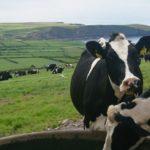 La Vaca Lechera: Una productora de nutrientes de inestimable valor