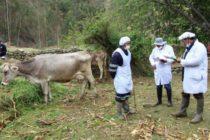Agro Rural y Proyecto Nueva Zelanda unifican estrategias a favor de productores lecheros