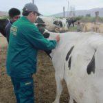 Senasa Atendió a más de 500 Animales en Zonas Afectadas por Huaycos