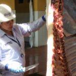 Mataderos : Un reto para las nuevas gestiones municipales