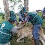 Comunidades Protegen su Producción Pecuaria con Vacunación Preventiva