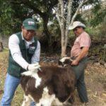 Vacunarán más de Doce mil Bovinos en Cusco para Prevenir Casos de Rabia