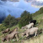 Recomendaciones para Mantener la Fertilidad de los Bovinos en Verano