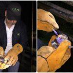 El ICA realizó jornada de captura de Murciélagos Hematófagos