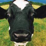 Importancia del Pastoreo para lograr una Producción Ganadera Rentable