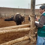 Senasa Fortalece Vigilancia Zoosanitaria frente a temporada de lluvias
