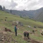MINAGRI intensifica acciones para mantener la Rabia bajo control en Apurímac