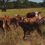 Una alianza de tres países impulsa el Cuidado del Pastizal Pampeano