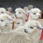 Exportaciones Textiles y de Confecciones crecerían este año en Perú por mayor Innovación