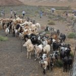 Producción Caprina en el Perú del Siglo XXI - Parte I