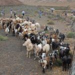 Producción Caprina en el Perú del Siglo XXI - Parte II