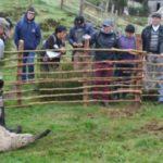 Productores Ovinos de Chile se preparan para el Invierno